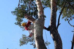 обрезки деревьев